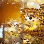 fall-1031695_960_720